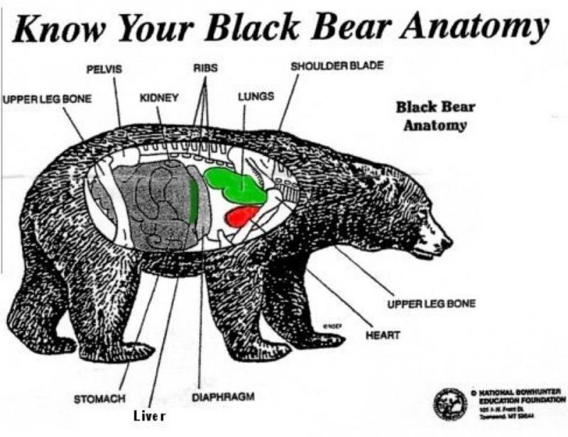 game anatomy