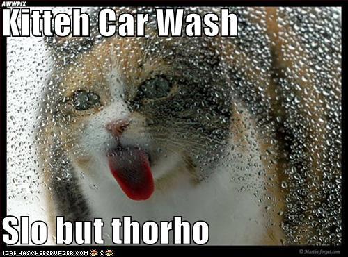 Funny Cheer Me Up Memes : Funny dog memes