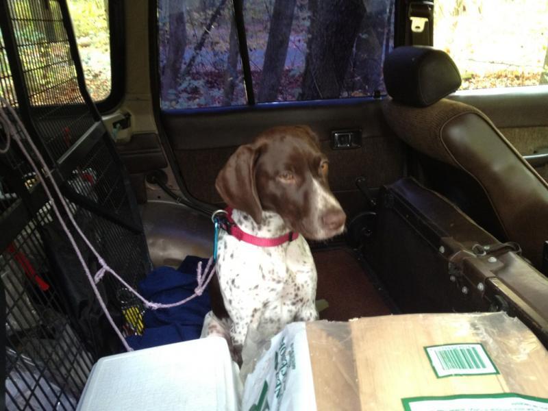 FJ60 Stolen with dog inside :(