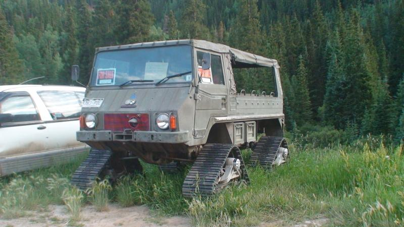 Name:  Pinzgauer Mattrrax Ophir.jpg