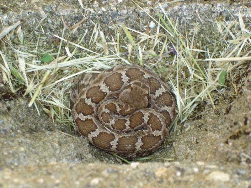 Com en 2009 07 01 pet python snake kills 2 year old baby girl