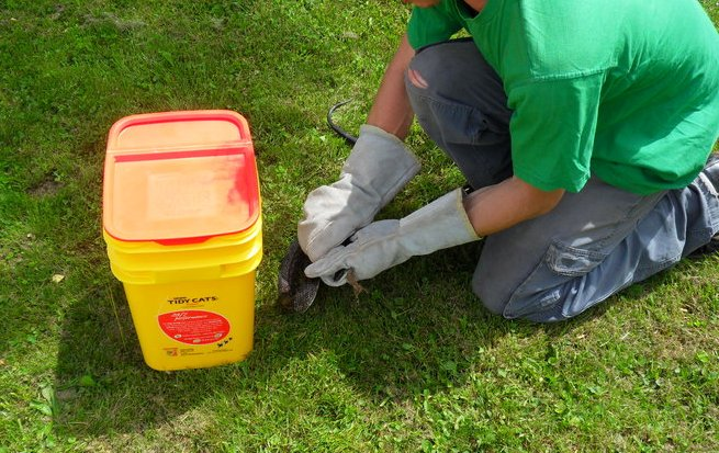 Controlling rodents in garden