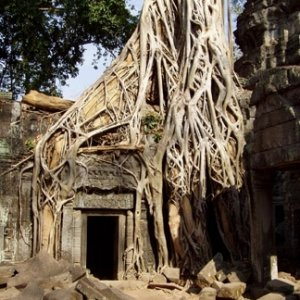 Ta Prohm Strangled