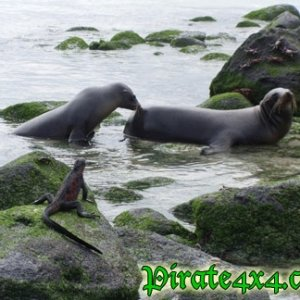 Cohabitation in the Galapagos